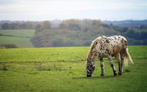 животные, лошади, лошадь, луга, роща
