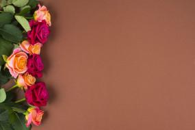 обои для рабочего стола 2560x1708 цветы, розы, бутоны