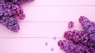 цветы, сирень, лепестки
