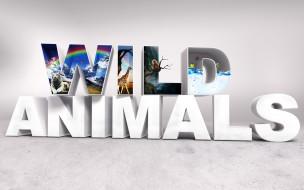 3д графика, другое , other, буквы, животные, природа
