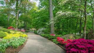 природа, парк, аллея, цветы, весна