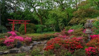 природа, парк, японский, садик
