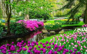 природа, парк, водоем, тюльпаны, весна