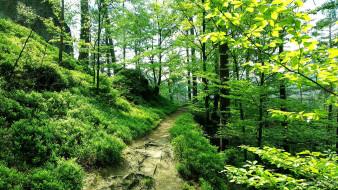 природа, лес, тропинка, зелень