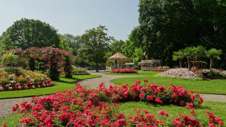 природа, парк, клумбы, цветы, карусель