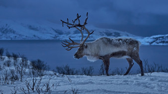 животные, олени, олень, зима, снег, животное