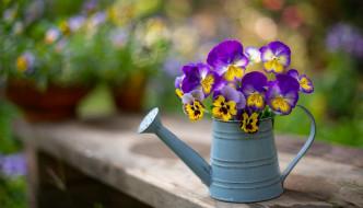 цветы, анютины глазки , садовые фиалки, букетик
