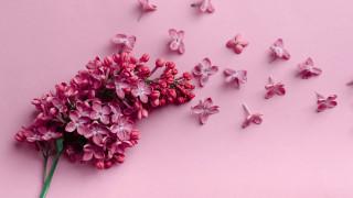 цветы, сирень, ветка, лепестки