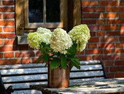 цветы, калина , бульдонеж