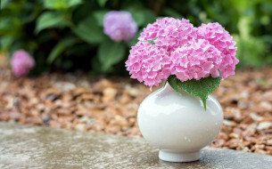 цветы, гортензия, ваза, розовая, букет