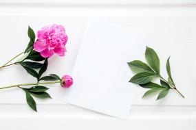 обои для рабочего стола 2560x1707 цветы, пионы, розовый