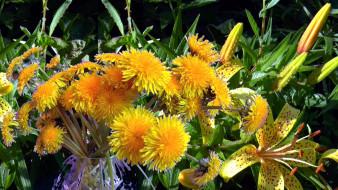 цветы, разные вместе, лилии, одуванчики