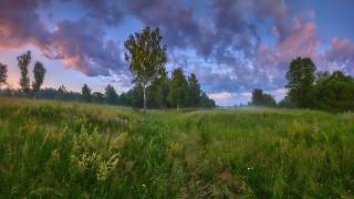 лето, луг, трава, тучи