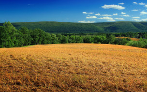 природа, поля, холмы, поле, деревья