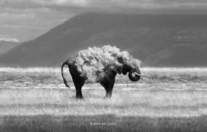 животные, слоны, слон, пыль, саванна, гора