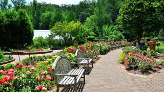 природа, парк, клумбы, скамейки, цветы