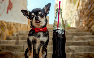 бренды, coca-cola, напиток, собачка