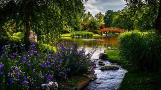 природа, парк, водоем, мостик, деревья, кусты