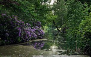 природа, парк, водоем, деревья, азалия