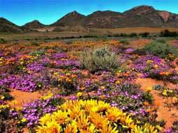 Namaqua national park,South Africa обои для рабочего стола 1920x1440 namaqua national park, south africa, природа, луга, namaqua, national, park, south, africa