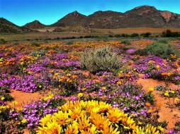 namaqua national park, south africa, природа, луга, namaqua, national, park, south, africa