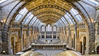 интерьер, дворцы,  музеи, музей, естествознания, natural, history, museum, южный, кенсингтон, лондон, великобритания