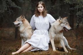 обои для рабочего стола 2560x1707 девушки, - блондинки,  светловолосые, девушка, модель, светловолосая, поза, красотка, лес, волки, животное, хищник, два, белое, платье, алёна, зверева