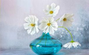 цветы, космея, ваза, белая