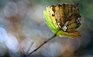 обои для рабочего стола 1920x1178 природа, листья, лист, блики