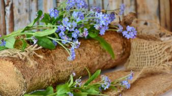 цветы, незабудки, полено, голубые