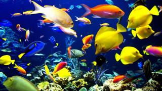 животные, рыбы, рыбки, кораллы