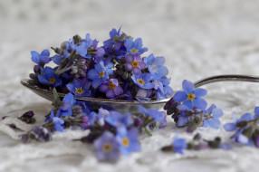цветы, незабудки, ложка, голубые