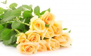 цветы, розы, желтые, букет