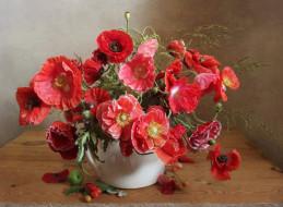 цветы, маки, ваза, букет