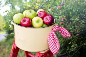 еда, яблоки, сад, кастрюля, платок