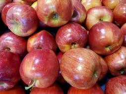 еда, яблоки, краснобокие, много