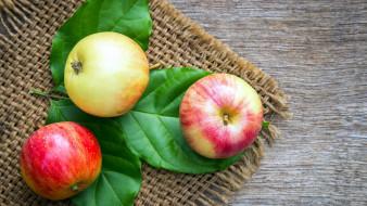 еда, яблоки, салфетка, трио, листья