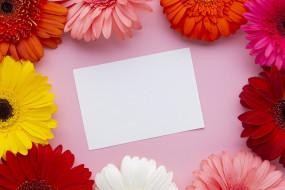 разноцветные, герберы, белая, бумага