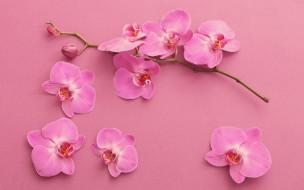 цветы, орхидеи, экзотика