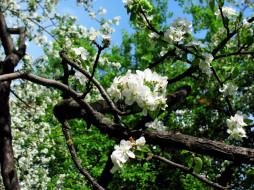 ветки, цветки, весна