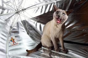 обои для рабочего стола 2048x1365 животные, коты, зонт