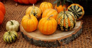 еда, тыква, осень, тыквы, урожай