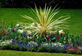 цветы, разные вместе, нарциссы, тюльпаны, незабудки
