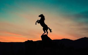 векторная графика, животные , animals, конь, силуэт, закат