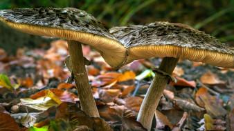 природа, грибы, дуэт, макро