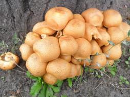 природа, грибы, грибная, семейка
