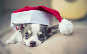 животные, собаки, christmas