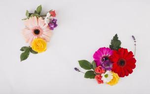 лаванда, герберы, розы