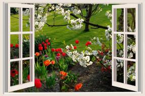 тюльпаны, нарциссы, цветущая, вишня