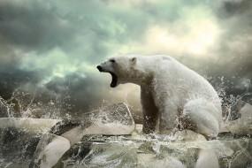 белый, животные, медведи, полярный, медведь, хищники, медвежьи, млекопитающие, снег, мороз, льды, шерсть, когти, пасть, клыки